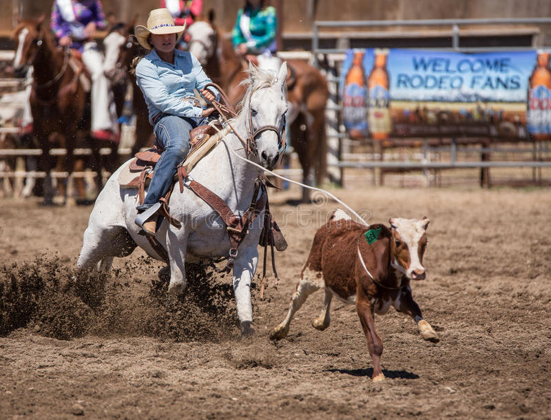 Not Getting Away This Time. A young cowgirl catches her calf. The rodeo in Cottonwood, California is a popular event on Mother's Day weekend in this small royalty free stock photography
