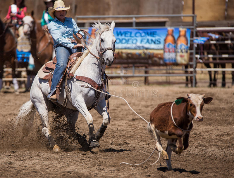 Not Getting Away This Time. A young cowgirl catches her calf. The rodeo in Cottonwood, California is a popular event on Mother's Day weekend in this small royalty free stock images