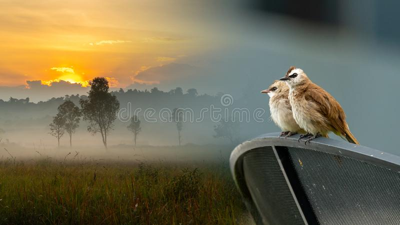 `This is not our home` Yellow-vented bulbul living in an urban area instead of jungle. Bangkok, Thailand royalty free stock images