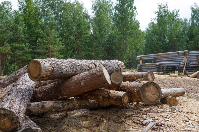 Not planed pine timber royalty free stock photo