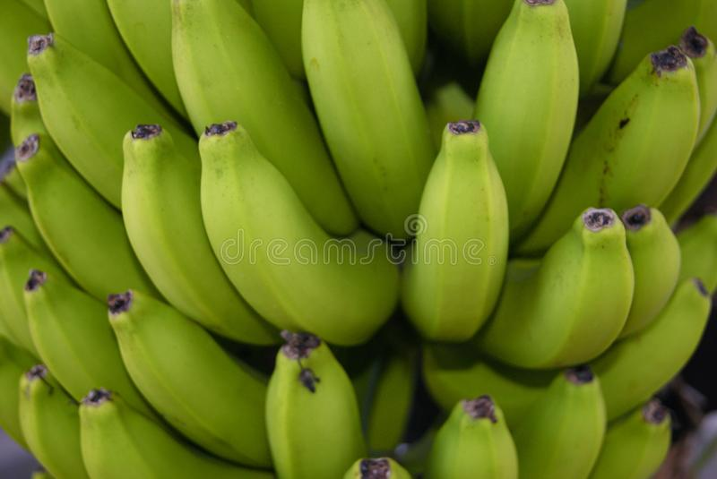 Not ripe stock photography