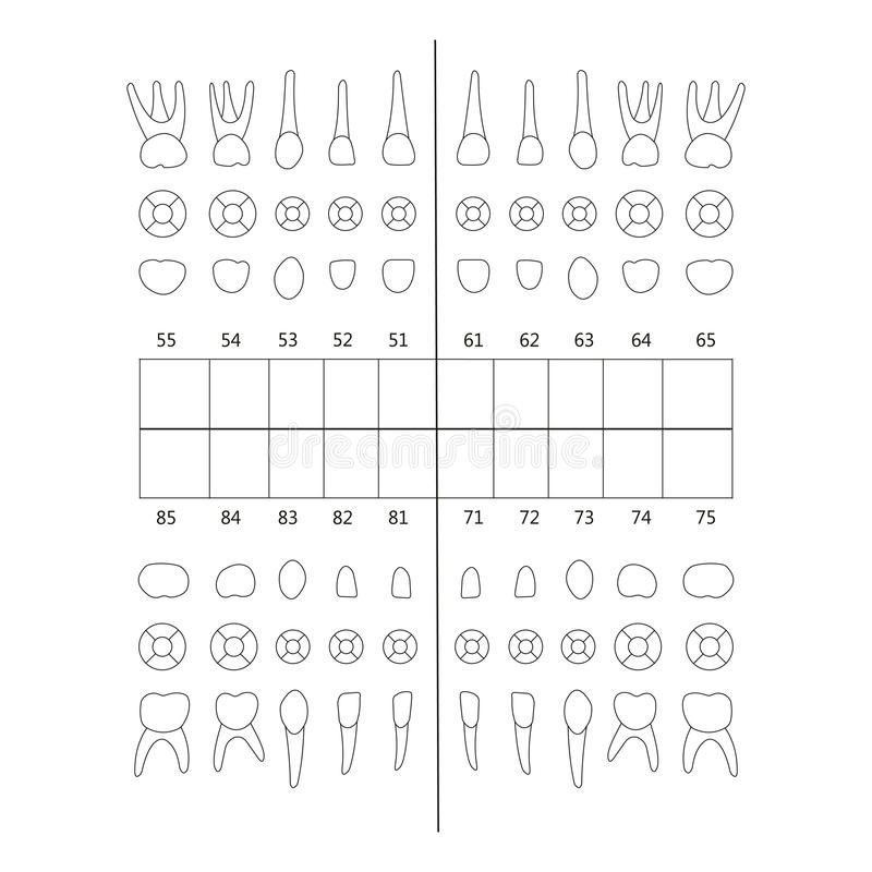 Nota del diente primario libre illustration