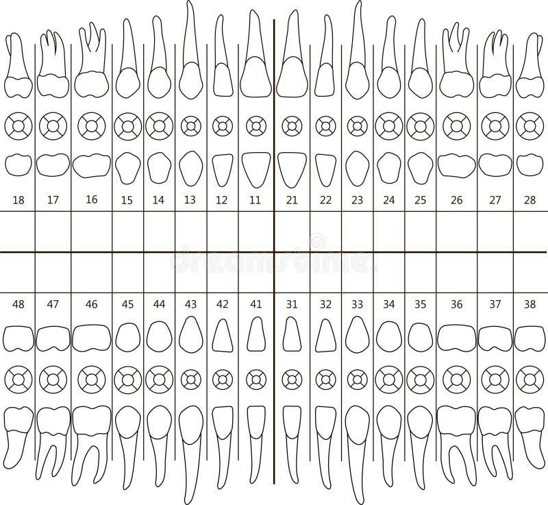 Nota dental ilustração royalty free