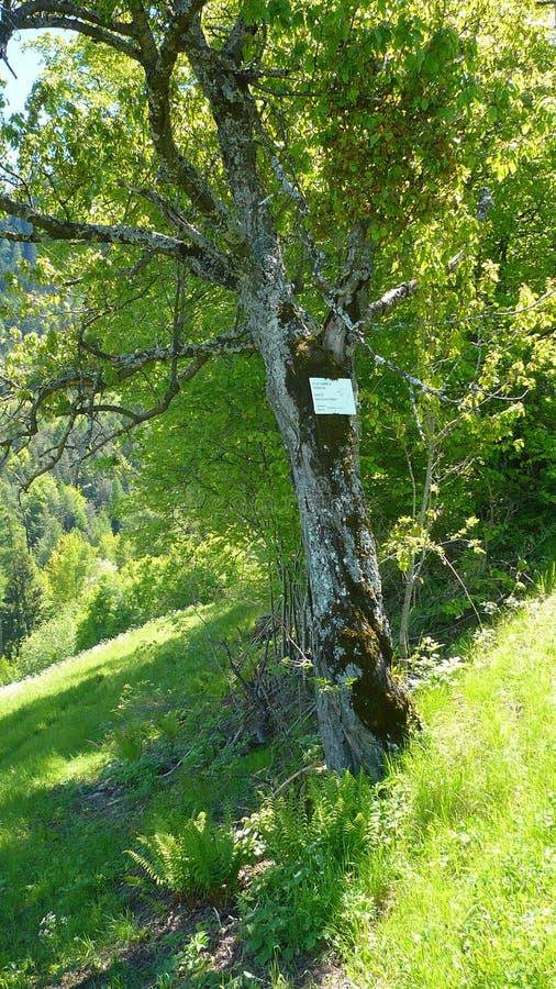 Notas da árvore imagens de stock royalty free