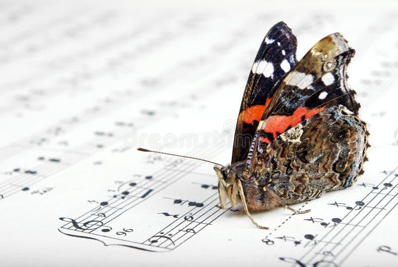 Notas e um close-up bonito do almirante da borboleta imagem de stock royalty free