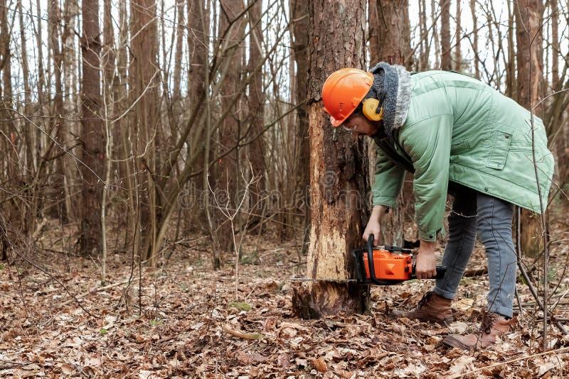 Notation, travailleur dans une tenue de protection avec du bois sciant de tronçonneuse Coupe des arbres, destruction de forêt Le  image libre de droits