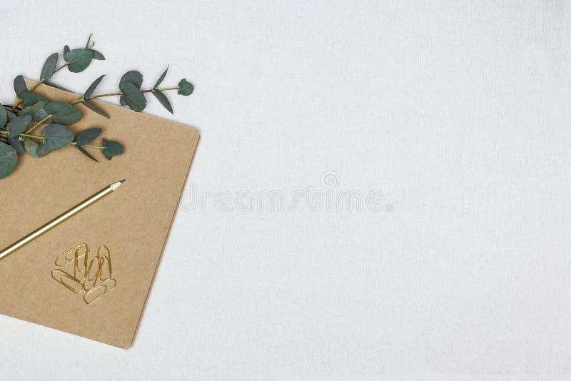 Notatka, eukaliptus gałąź, papierowe klamerki na białym tle zdjęcia royalty free