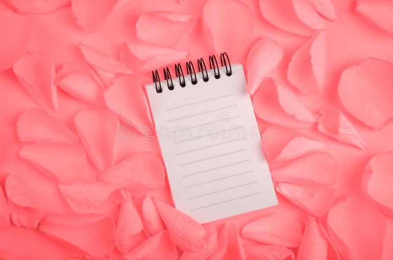 Note pad open empty sheet in rose petals on solid color paper background romantic template. Note pad open empty sheet in rose petals on solid color paper royalty free stock photo
