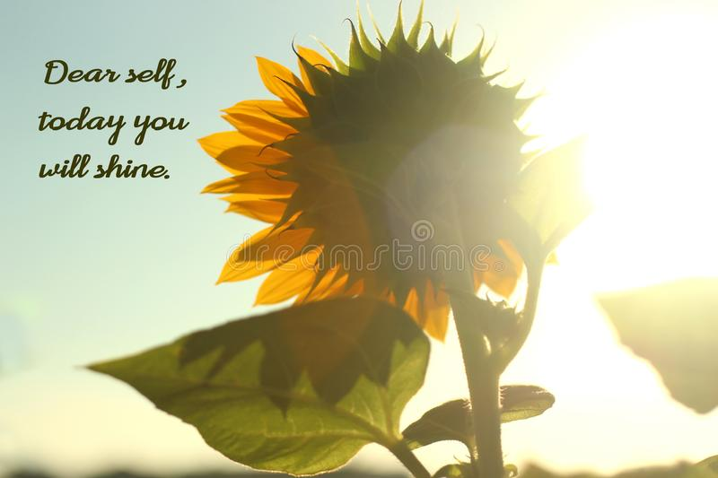 Note to self- Dear self, today you will shine. Inspirational motivational quote with nature- Dear self, today you will shine. With soft sunflower blossom from royalty free stock images