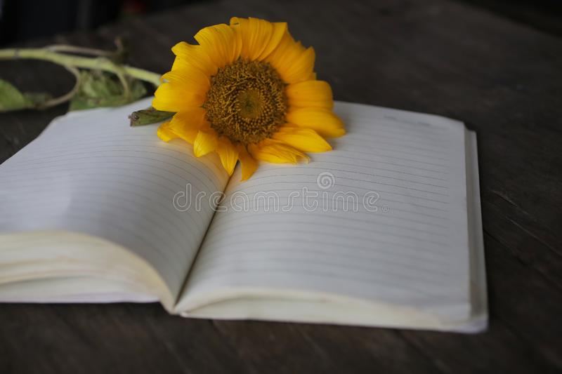 Notebook with flower and pen on wooden table. Blank page on open book page for copy space of text or design. stock images