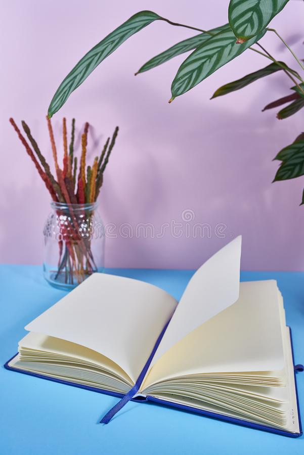 Notebook of notes on a blue table with a pink background and a glass with colored incense and a green plant.  stock photo