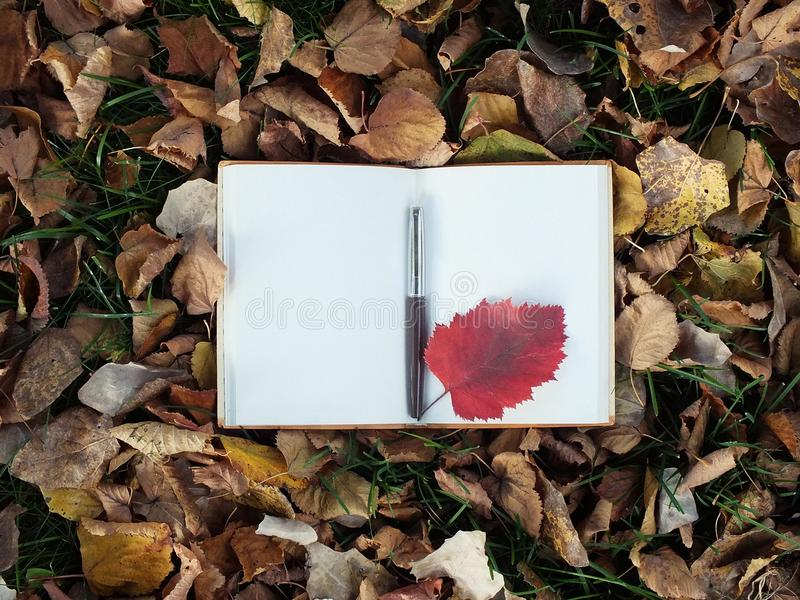 Notepad on autumn leaves background. Notebook on autumn leaves background royalty free stock photo