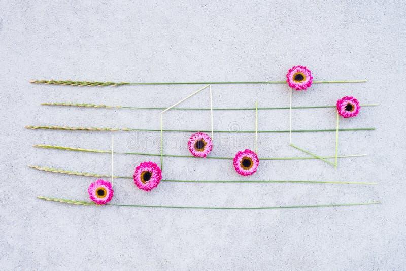 Notes de musique faites en strawflowers roses et herbe sauvage photographie stock libre de droits