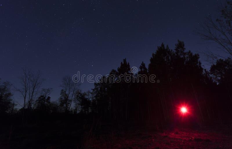 Notfall-stobe im Wald lizenzfreie stockbilder
