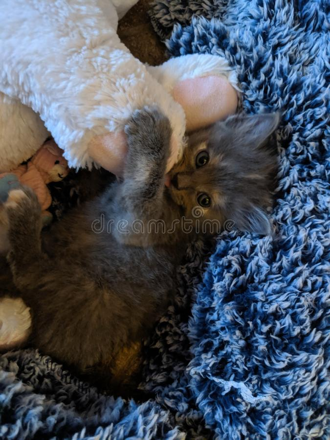Sweet baby kitten snuggling. So precious and sweet baby kitten snuggling stock photography