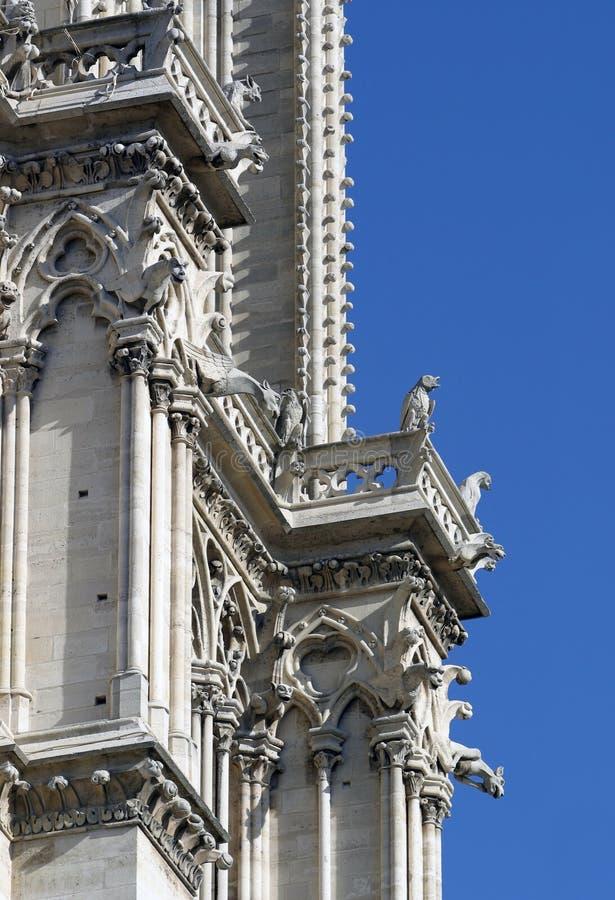 notre детали dame собора стоковые фотографии rf