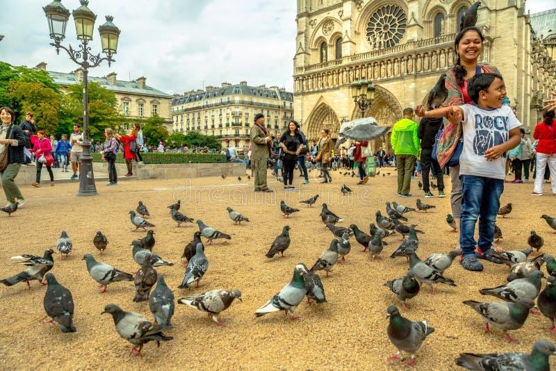 吃在Notre Dame的鸽子 免版税库存图片