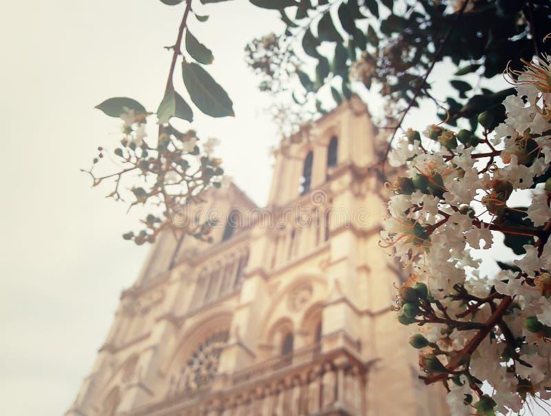 Notre-Dame royaltyfria bilder