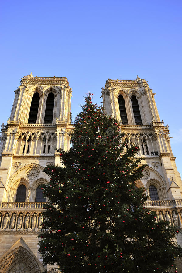 Download Notre Dame Cathedral, Christmas Tree Stock Image - Image of religion, tree: 16970345