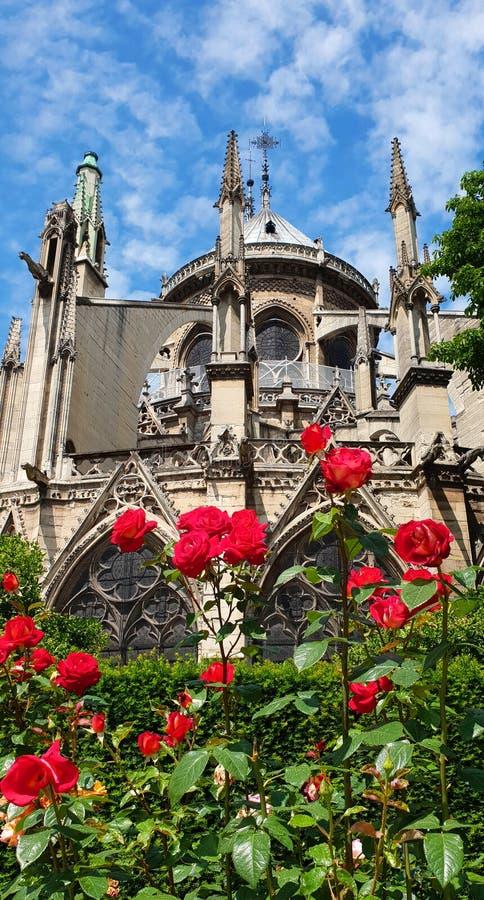 Notre Dame Cathedral et roses rouges image libre de droits