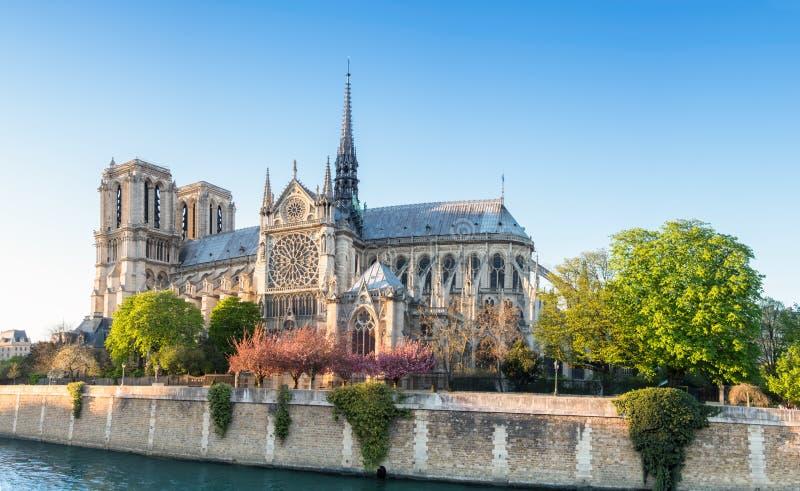 Notre Dame Cathedral i Paris på en ljus eftermiddag i vår royaltyfri foto