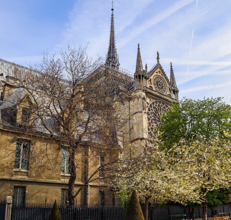 Notre Dame Cathedral i tr arkivfoton