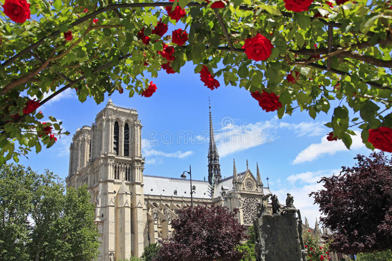 Notre Dame de Paris Cathedral, France, roses sur le premier plan photos stock