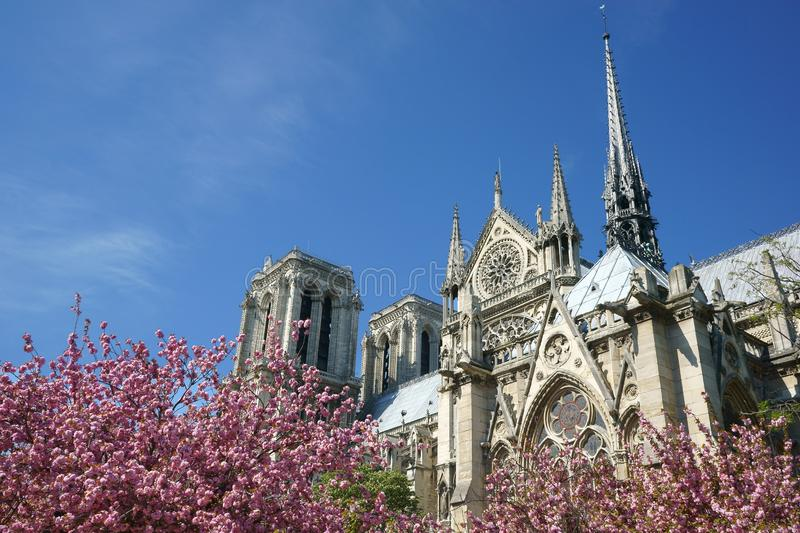 Notre-Dame de Paris cathedral Spires Rooster Pink blossoms. Notre-Dame de Paris in April. South view with the spires and the rooster. Pink cherry blossoms on the royalty free stock photography