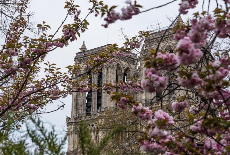 Notre-Dame de Paris, Paris fotografia de stock