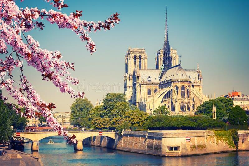 Notre Dame de Paris na mola imagem de stock royalty free