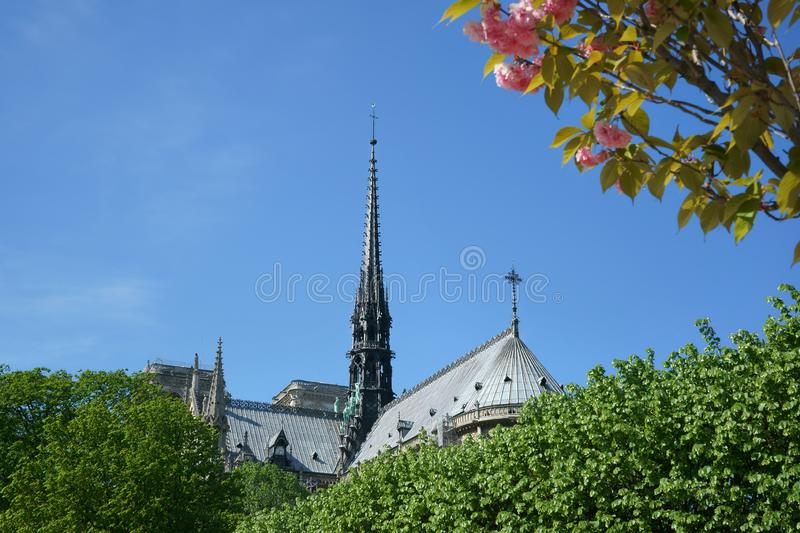 Notre-Dame de Paris Spire and roof Pink cherry blossoms. Notre-Dame de Paris roof and spire seen between trees. Pink cherry blossoms and blue sky. April in Paris royalty free stock photography