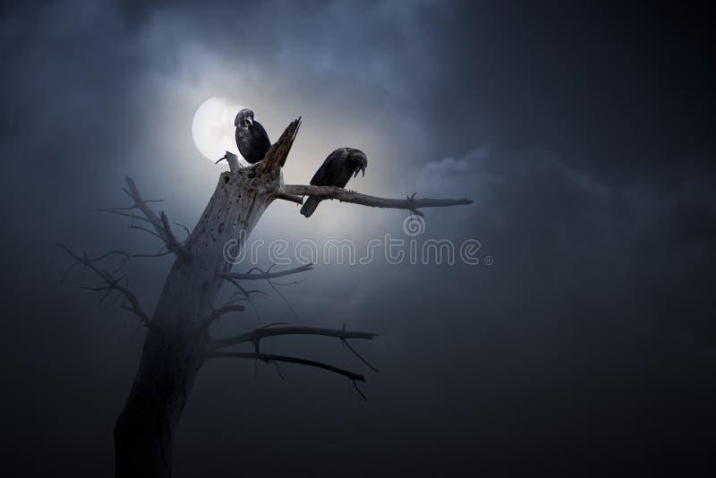 Notte dei corvi immagine stock libera da diritti