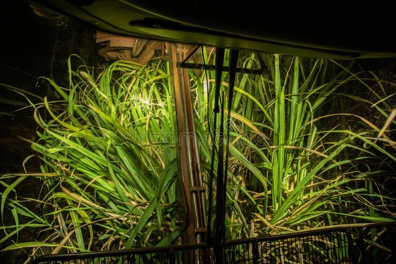 Notte della piantagione più hasvest della canna da zucchero immagine stock