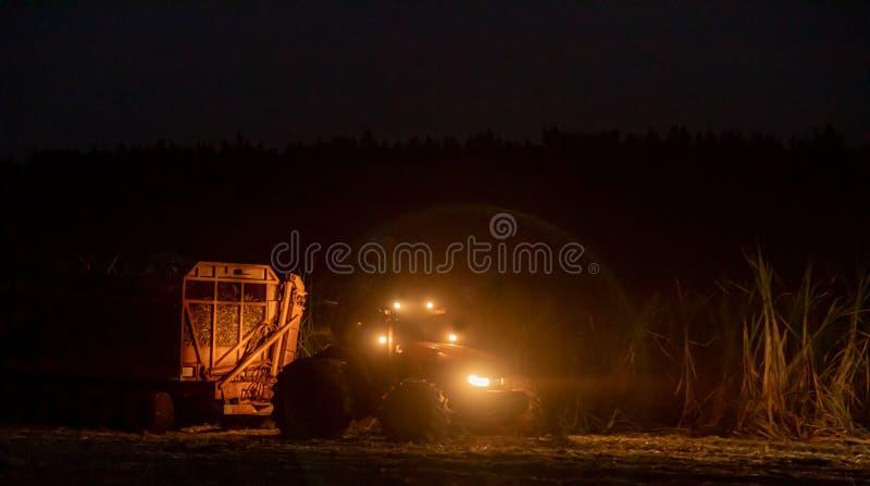 Notte della piantagione più hasvest della canna da zucchero immagini stock