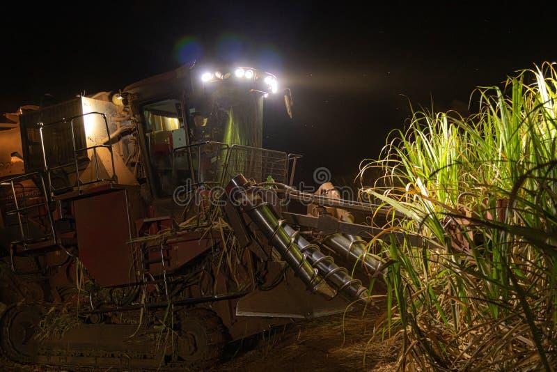 Notte della piantagione più hasvest della canna da zucchero immagine stock libera da diritti