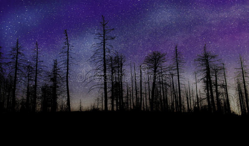 Notte delle stelle fotografie stock