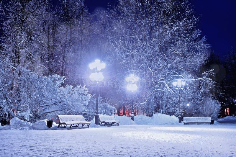 Notte di inverno Inverno di paesaggio di inverno nel parco nevoso di notte con i banchi coperti di neve immagini stock