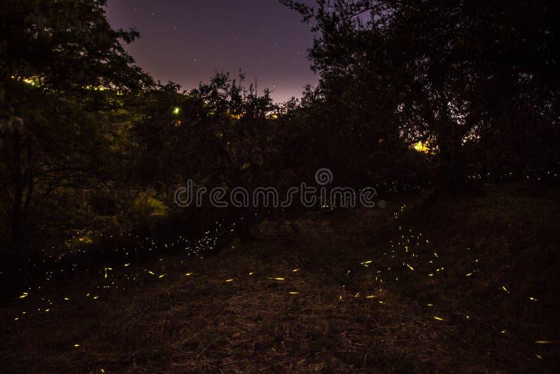Notte e lucciole fotografie stock libere da diritti