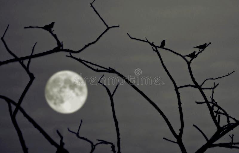 Notte ed uccello fotografia stock libera da diritti