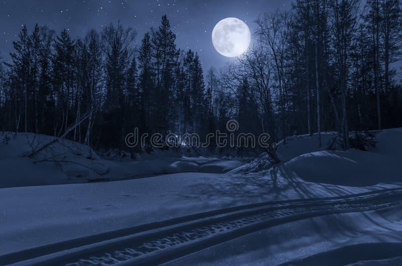 Notte, foresta di inverno nella luce della luna immagini stock libere da diritti