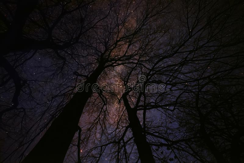 Notte leggiadramente stellata magica fotografie stock