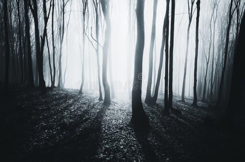 Notte magica in foresta fotografie stock libere da diritti