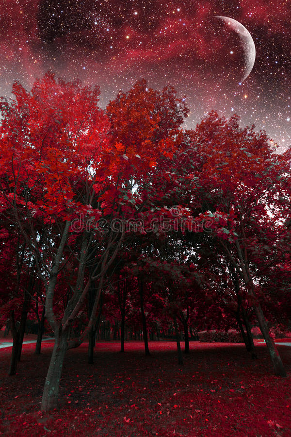 Notte mistica della molla fotografie stock libere da diritti
