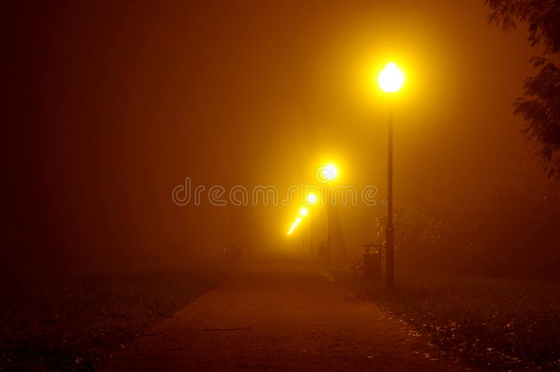 Notte nel parco. fotografia stock libera da diritti