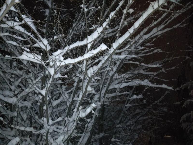 Notte nera, neve bianca ed alberi fotografie stock