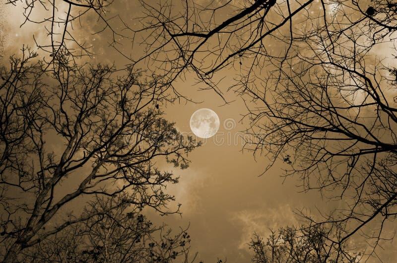 Notte romantica della luna piena nella stagione tropicale della foresta di caduta fotografia stock