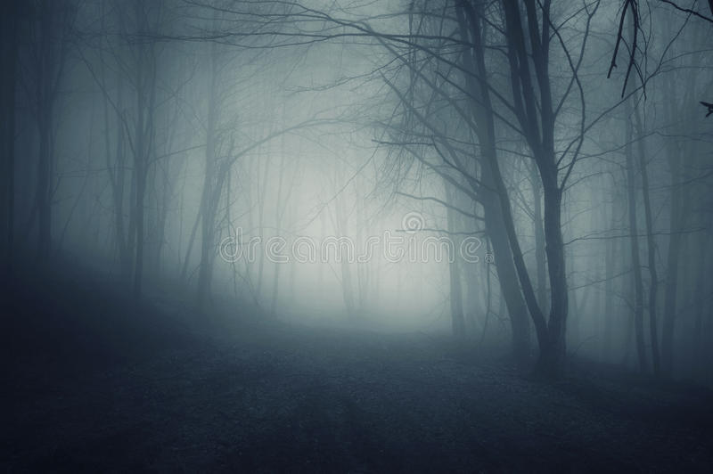 Notte in una foresta scura con nebbia blu in autunno fotografia stock libera da diritti