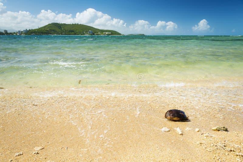 Noumea Nya Kaledonien strand royaltyfri bild