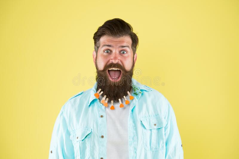 Nourish hair with love. Valentines day. Barbershop concept. Hairdresser salon. Hairstyle guideline. Man lot clothespin. On beard. Brutal hipster with stock photography