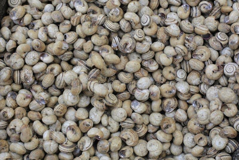 Nourriture fraîche d'escargots photographie stock libre de droits